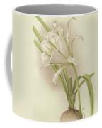 White Amaryllis   Ismene Andreana Coffee Mug