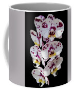 White And Magenta Orchids Coffee Mug