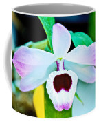 White And Purple Orchid In Greenhouse At Pilgrim Place In Claremont-california Coffee Mug