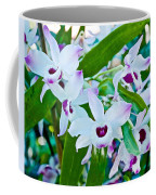 White And Purple Orchids In Greenhouse At Pilgrim Place In Claremont-california Coffee Mug
