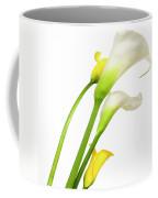 White Arums In Studio. Flowers. Coffee Mug