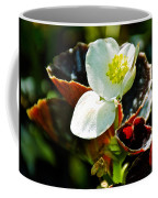 White Begonia At Pilgrim Place In Claremont-california  Coffee Mug