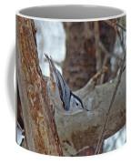White Breasted Nuthatch - Sitta Carolinensis Coffee Mug