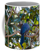 White-cheeked Turaco Coffee Mug