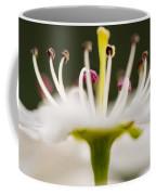 White Cherry Blossom Against Green Coffee Mug