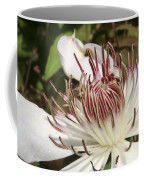White Clematis Henryi Coffee Mug
