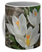 White Croci Coffee Mug
