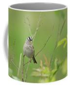 White Crown Sparrow Coffee Mug