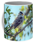 White-crowned Sparrow 0033-111017-1cr Coffee Mug