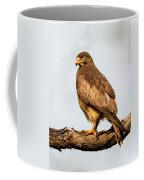 White-eyed Buzzard Butastur Teesa Coffee Mug