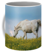White Horse Of Cataloochee Ranch 2 - May 30 2017 Coffee Mug by D K Wall