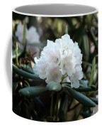 White Inflorence Of  Rhododendron Plant Coffee Mug
