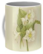 White Orchids   Eucharis Sanderiana Coffee Mug