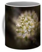White Plum Blossom- 2 Coffee Mug