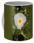 White Poppy With Buds Coffee Mug