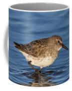White-rumped Sandpiper Coffee Mug