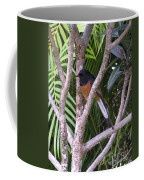 White Rumped Shama Coffee Mug