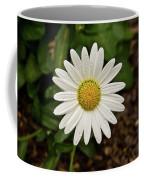 White Shasta Daisy In The Rain Coffee Mug