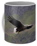 White-tailed Eagle Approaches Coffee Mug