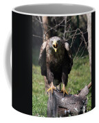 White Tailed Eagle Screaming Nature Wildlife Scene Coffee Mug