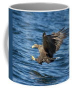 White-tailed Eagle Taking Fish Coffee Mug
