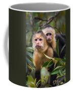 White-throated Capuchin Monkeys Cebus Coffee Mug