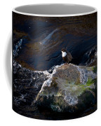 White-throated Dipper Nr 1 Coffee Mug
