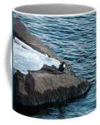 White-throated Dipper Nr 3 Coffee Mug