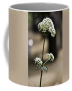 White Valerian Coffee Mug