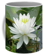 White Water Lily Wildflower - Nymphaeaceae Coffee Mug