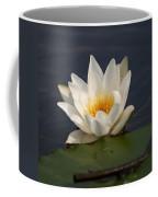 White Waterlily 1 Coffee Mug