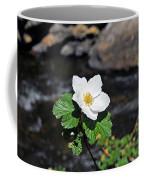 White Wild Rose In Big Thompson Canyon Coffee Mug