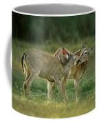 Whitetail Deer Share An Initmate Moment Texas Wildlife Coffee Mug