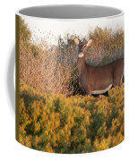 Whitetail Doe Coffee Mug