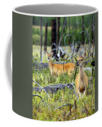 Whitetails Coffee Mug