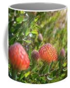 Wild Beautiful Telopea Flower In Sunset Light  Coffee Mug