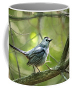 Wild Birds - Gray Catbird Coffee Mug
