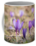Wild Crocus Balkan Endemic Coffee Mug