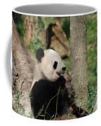 Wild Giant Panda Bear Eating Bamboo Shoots Coffee Mug