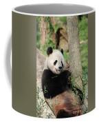 Wild Panda Bear Eating Bamboo Shoots While Leaning Against A Tre Coffee Mug