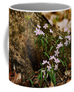 Wild Spring Beauty Coffee Mug