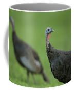 Wild Turkey Meleagris Gallopavo Coffee Mug by Joel Sartore