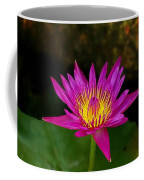 Wild Water Lily Coffee Mug