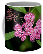 Wildflowers Come In Many Sizes Coffee Mug
