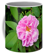 Winter Park Rose Coffee Mug