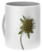 Winter Pin Cushion Plant Coffee Mug