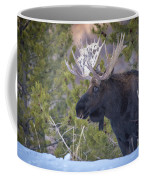 Winter's Arrival  Coffee Mug