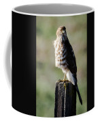 Wintery Cooper Coffee Mug
