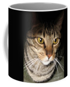 Wise Cat Coffee Mug