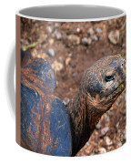 Wise Old Tortoise Coffee Mug